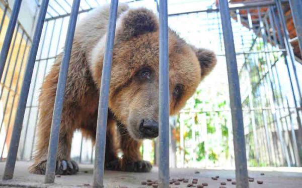 Ursa Marsha deve ser transferida para um santuário em São Paulo