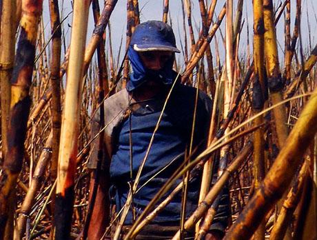 Trabalho escravo ainda é realidade no Piauí; relatório expõe situação alarmante