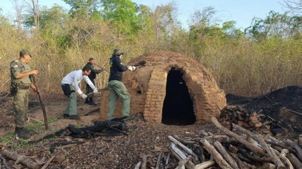Semar destrói fornos clandestinos de carvão em Regeneração