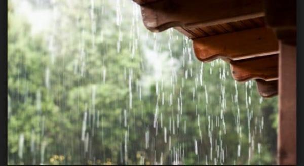 Chuva com ventos derruba cabo de energia e mata animais em Amarante