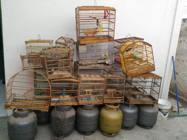 """Polícia Civil de Água Branca continuando a """"Operação PC24h"""", descobre depósito clandestino de gás e pequeno vaso com Maconha"""