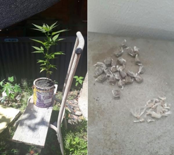 Polícia Militar prende homem por tráfico de drogas e apreende um pé de maconha em Água Branca